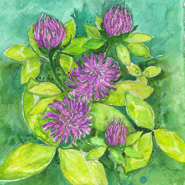 Red Clover (Tranquility) Mounted Print