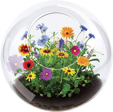 Unique Gardener Grow Your Own Wild Flower Garden - Meadow Flower Glass Terrarium