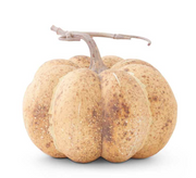 Cream and Brown Speckled Pumpkin - Courtyard Style
