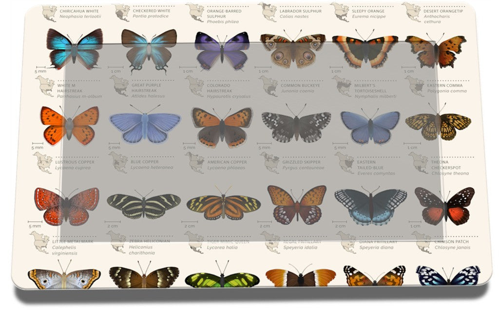 42 North American butterflies Lennox by Eleanor Lutz | GelaSkins