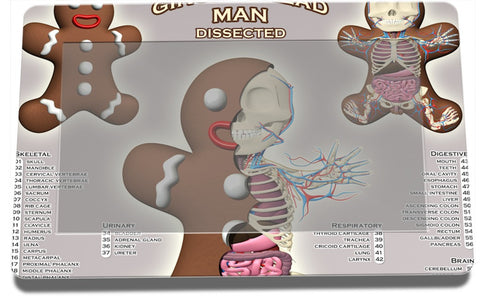 Gingerbread Man Dissected Lennox