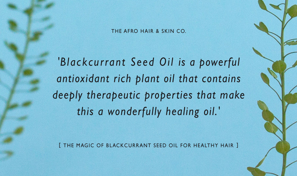 The Magic of Blackcurrant Seed Oil for Healthy Skin