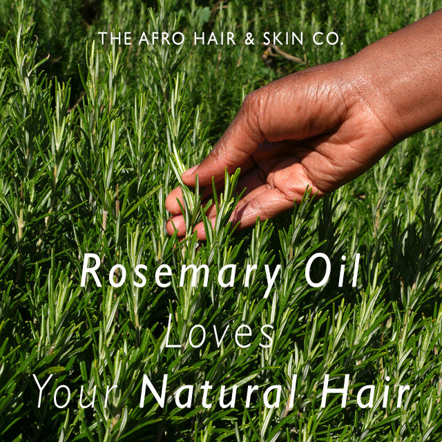 Rosemary Oil Loves Your Natural Hair