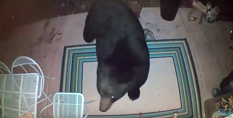 Bear Appears at Front Door
