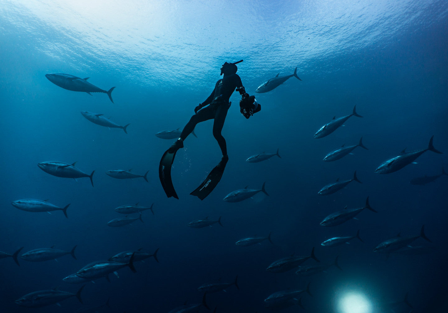 FREEDIVING AND SPEARFISHING WETSUITS