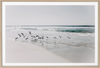 Donna Delaney - Beach Birds 2 Print Landscape (various sizes) (2411080417364)