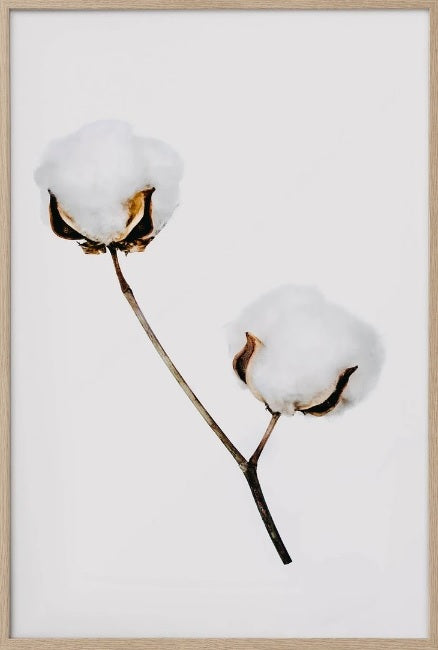 Donna Delaney - Bunny Tail 2 Prints (various sizes)