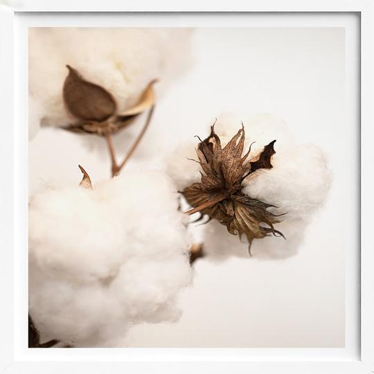 Donna Delaney - Cotton Bud - Square Print (4490958569556)