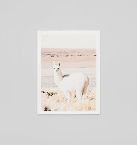 Middle of Nowhere 'Bicycle' Framed Print - STORE PICK UP ONLY