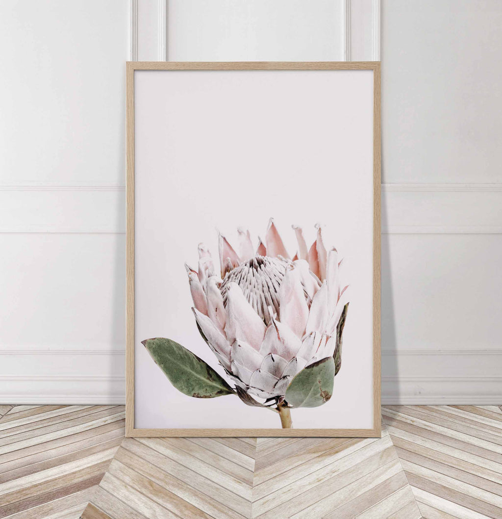 Donna Delaney - Pretty Protea Print (various sizes) - norsu interiors