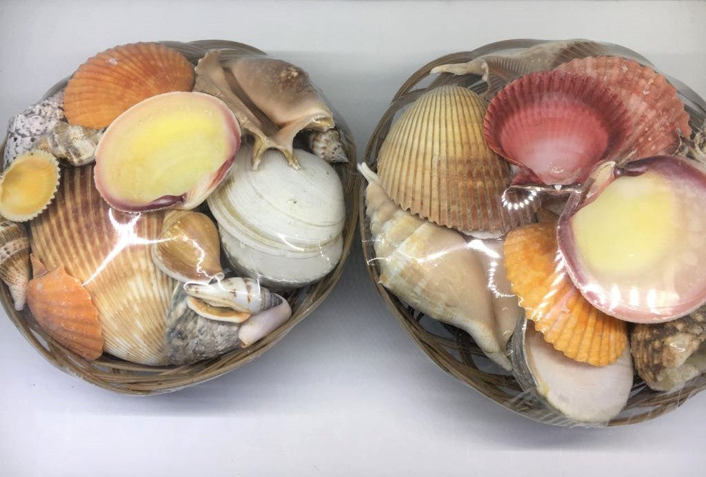 Shell Basket Large