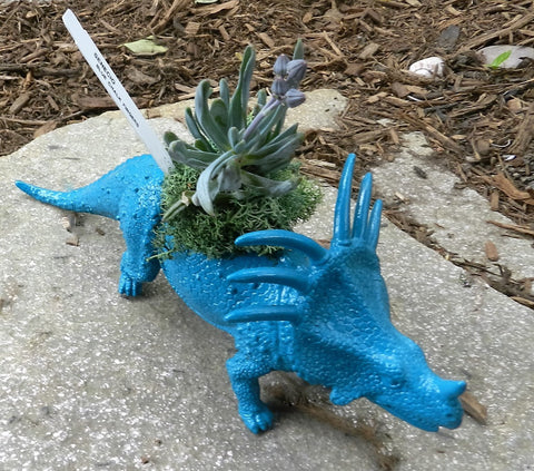 Blue Triceratops Planter