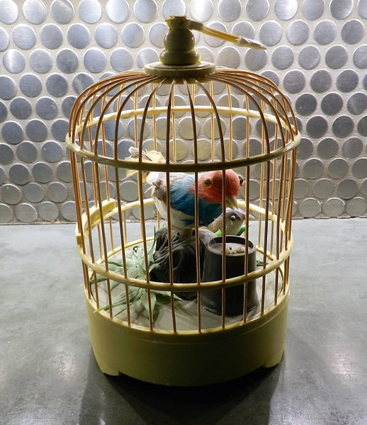 Colorful Bird in Cage