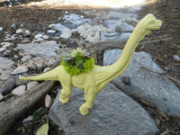 Yellow Dinosaur Planter