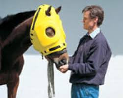 Equine Head Protector