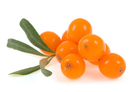 Sea Buckthorn Seed Oil Wild