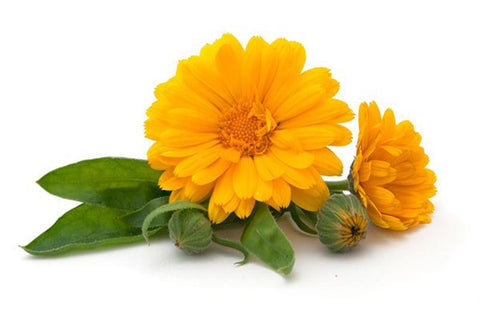 Calendula Macerated Oil Organic