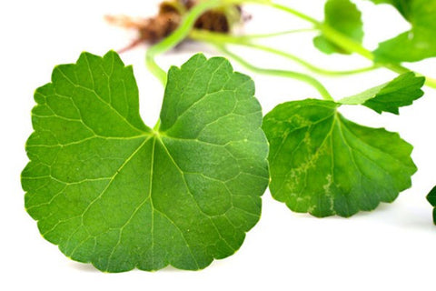 Asiatic Centella Extract