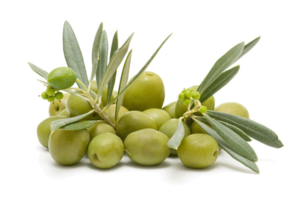 Olive Oil Cosmetic Organic