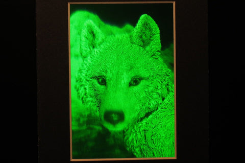 ARCTIC WOLF (Framed)