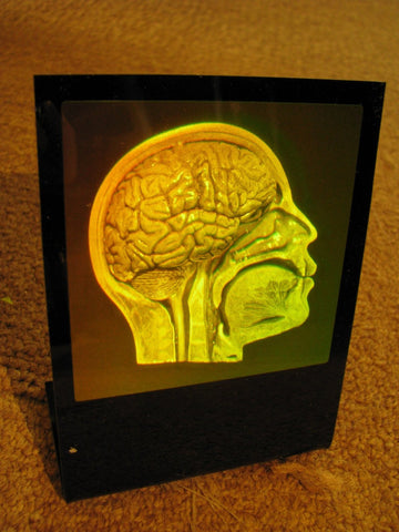 Brain/Skull (Anatomically Accurate) hologram Deskstand, Photopolymer Film