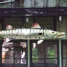 "GIANT PAINTED METAL BARRACUDA 71"" x 18""t"