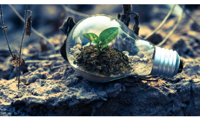 An empty light bulb with a plant inside laying on the ground
