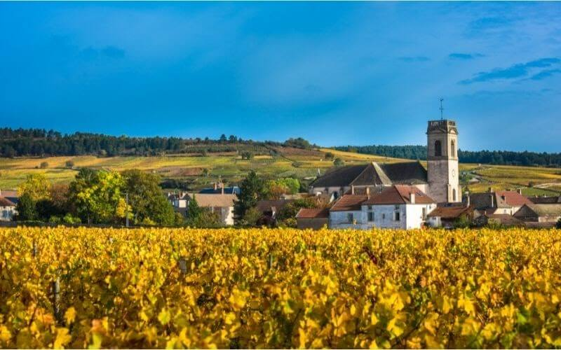 Chateau with vineyards in the autumn season, Burgundy, France