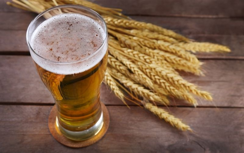 Glass of Beer and Wheat