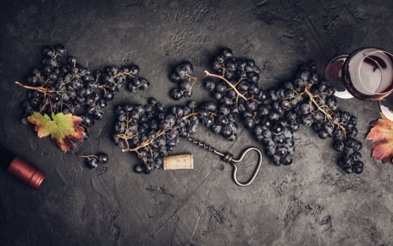 Wine grapes on a dark background