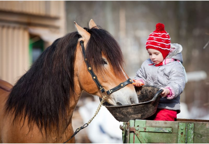 Child feeding a horse in winter