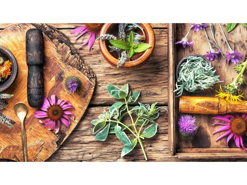 Medicinal plants on a wooden board