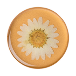 PopGrip Pressed Flower White Daisy (801476), PopSockets