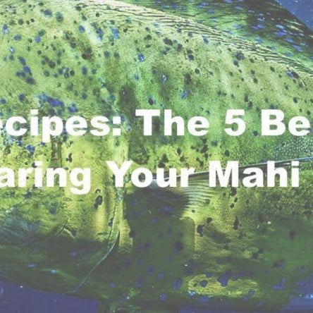5 Best Mahi Mahi Recipes