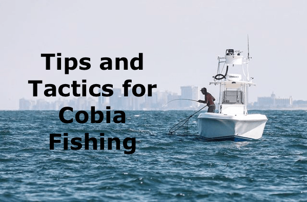 Cobia Fishing: Tips and Tricks for the everyday fisherman