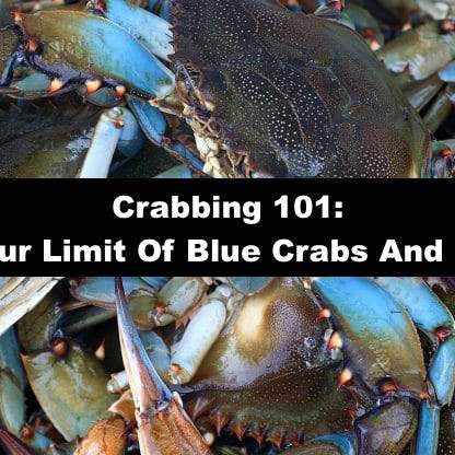 Crabbing 101: Catching Your Limit Of Blue Crabs And Stone Crabs