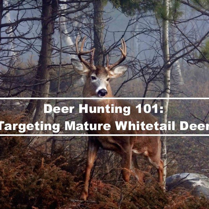 Deer Hunting 101: Targeting Mature Whitetail Deer