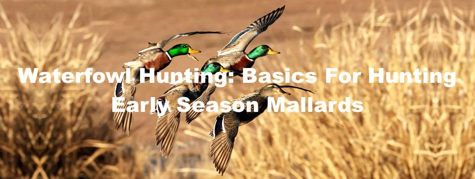 Waterfowl Hunting: Basics For Hunting Early Season Mallards