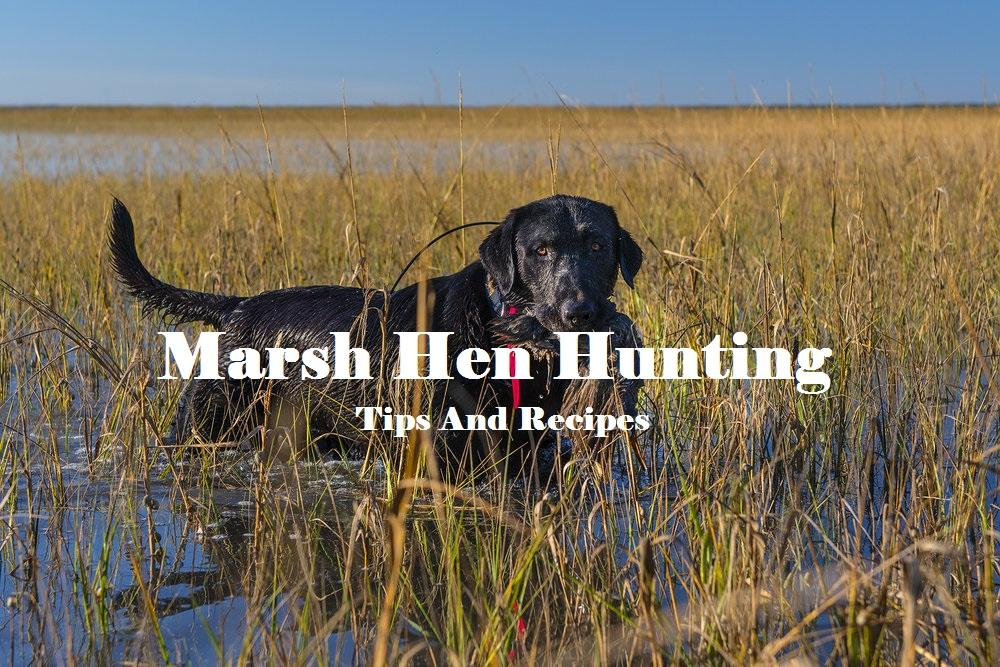 Marsh Hen Hunting: Tips and Recipes