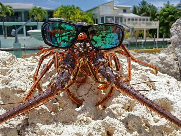Lobster with glasses
