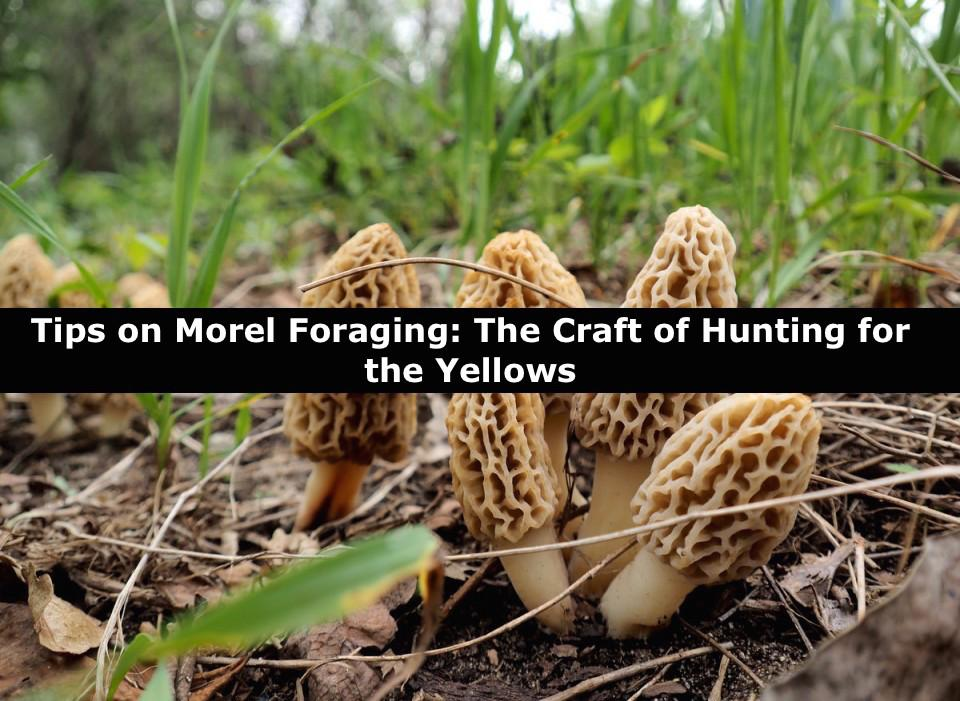 Morel Foraging