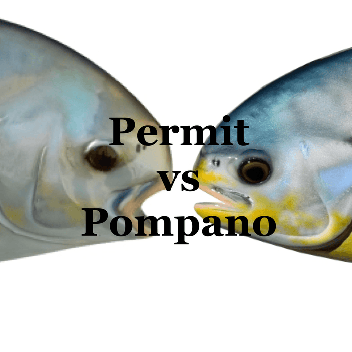Permit vs Pompano: Can You Tell The Difference?