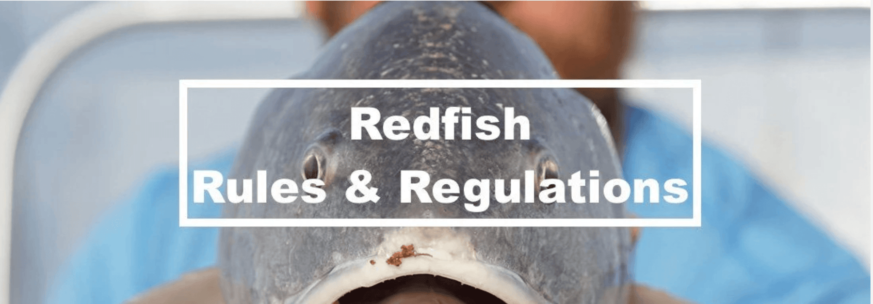 Redfish Regulations and Rules