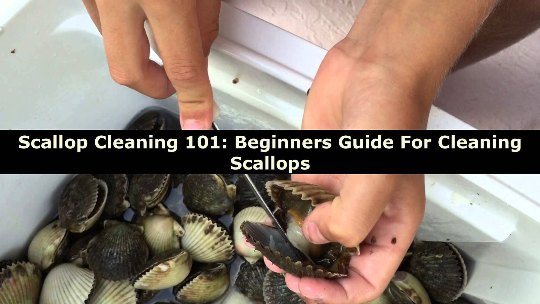 Scallop Cleaning 101