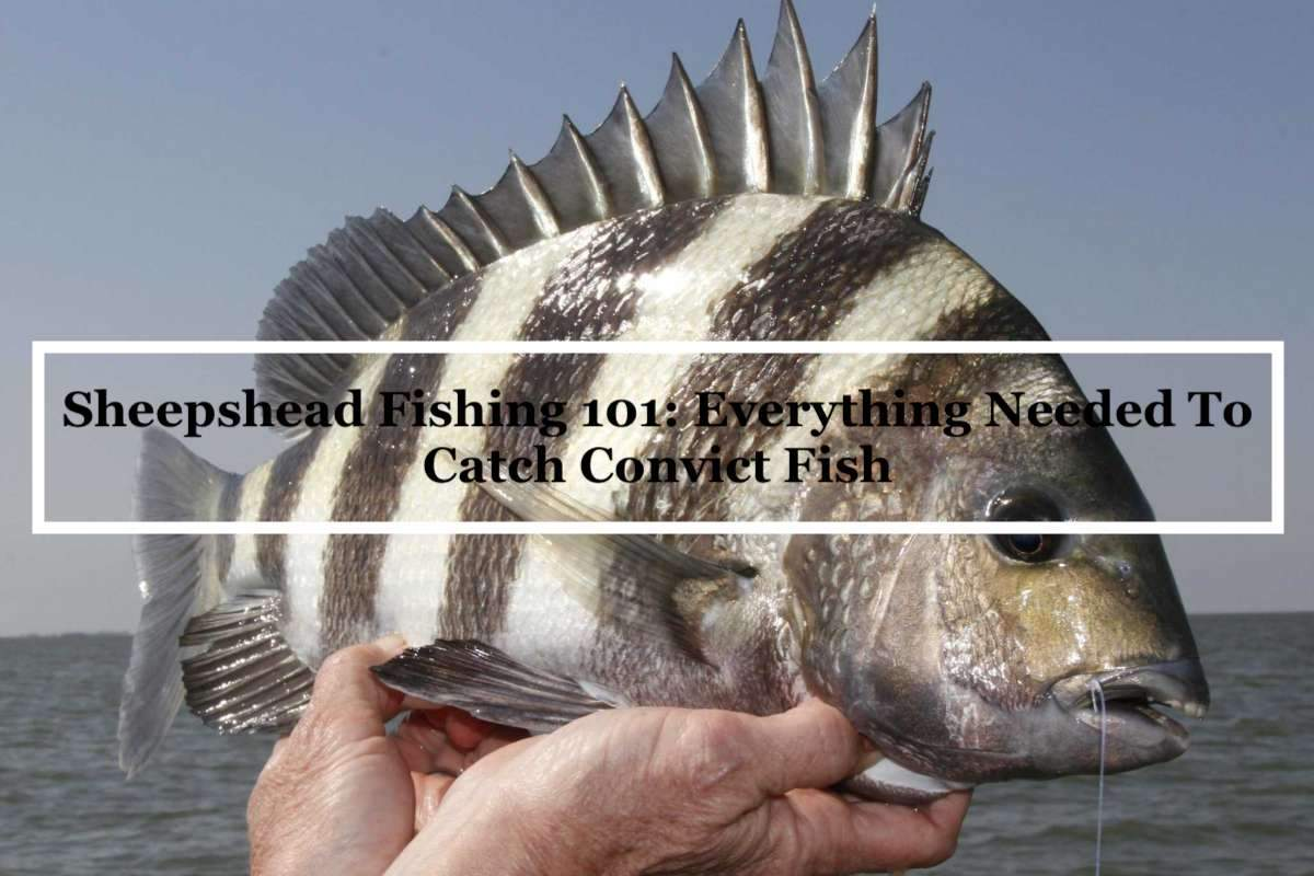 Sheepshead Fishing 101: Everything Needed To Catch Convict Fish