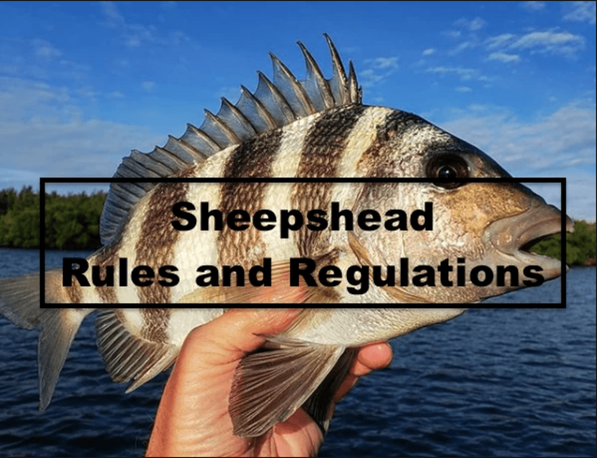 Sheepshead Regulations and Rules