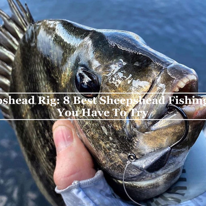 Sheepshead Rig- 8 best sheepshead fishing rigs