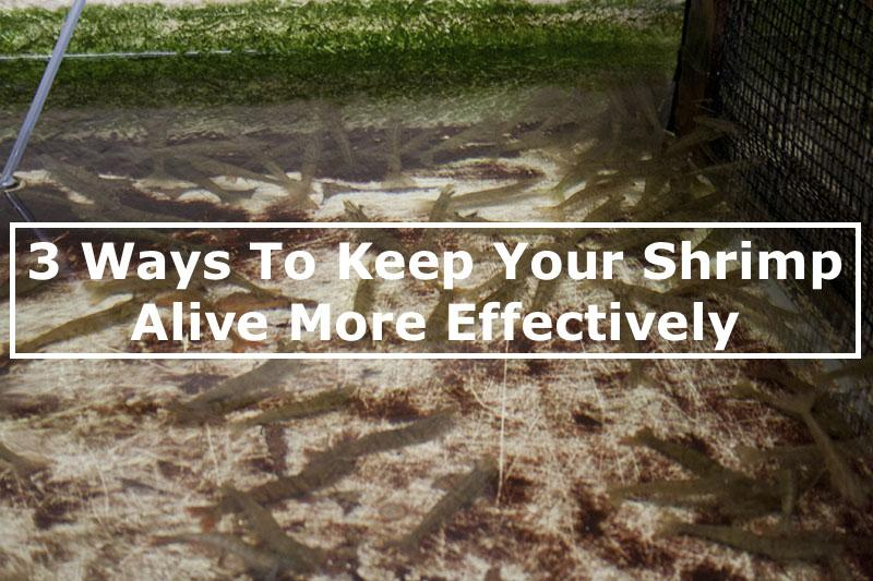 3 Ways To Keep Your Live Shrimp Alive
