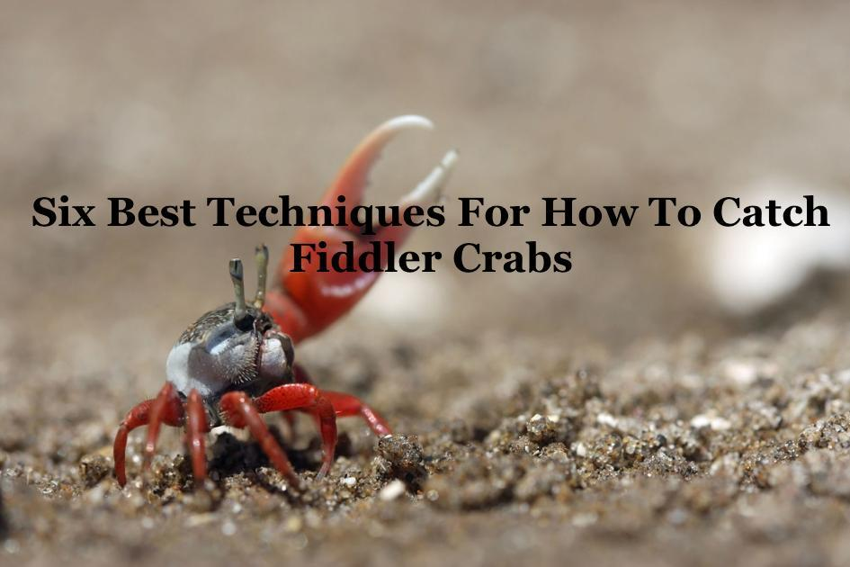 Six Best Techniques For How To Catch Fiddler Crabs