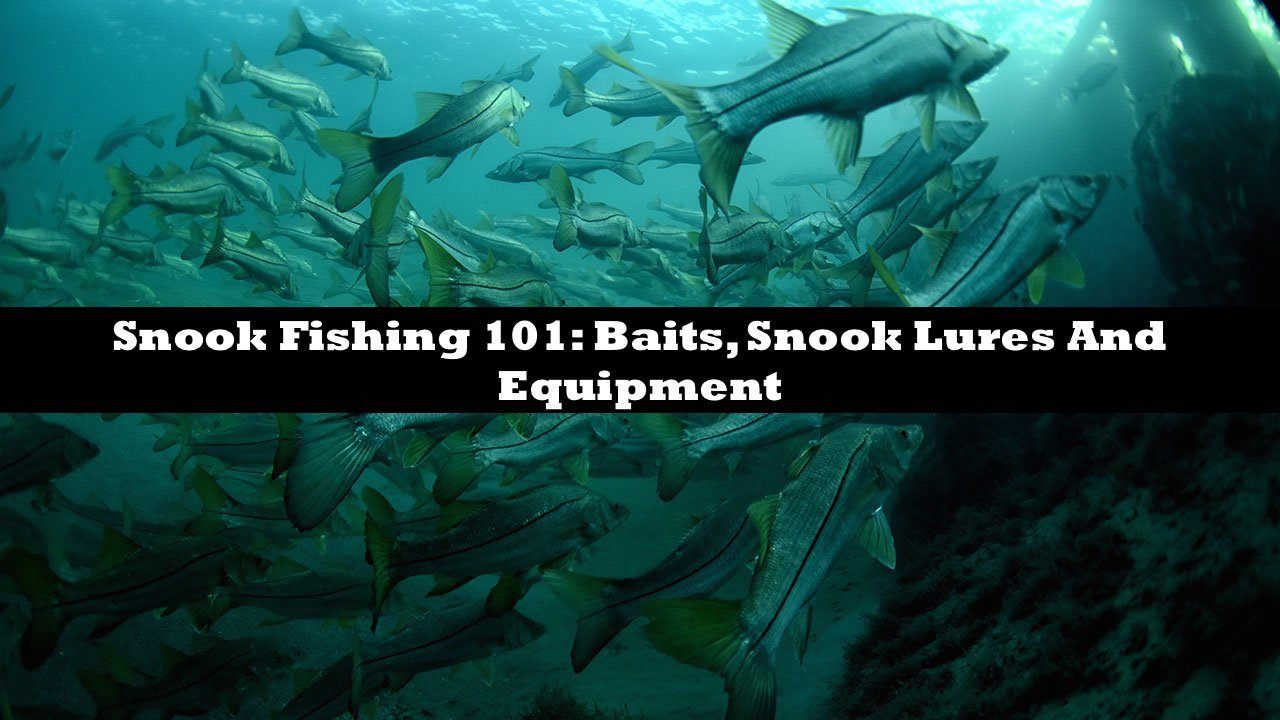 Snook Fishing 101